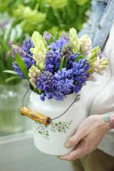 Гиацинты в саду: описание, виды и сорта, посадка и уход в открытом грунте и в домашних условиях, когда выкапывать и что делать после цветения (70 Фото & Видео) +Отзывы