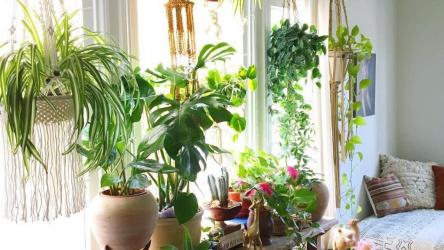 Какие цветы нельзя держать дома и почему? ТОП-25 опасных для здоровья растений +Приметы | ( 25+ Фото & Видео )