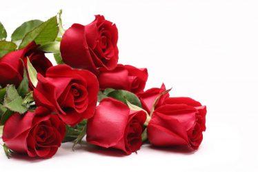 Как сохранить саженцы роз до посадки? Описание, классификация, размножение, меры борьбы с вредителями (75+ Фото & Видео) +Отзывы