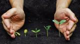 Сенная палочка: использование для сада и огорода, как вырастить. Значение для человека   (Фото & Видео) +Отзывы