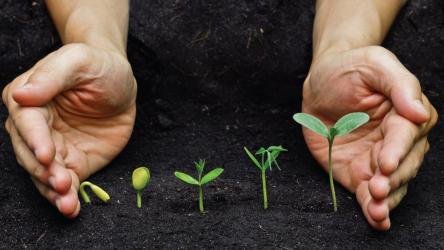 Сенная палочка: использование для сада и огорода, как вырастить. Значение для человека | (Фото & Видео) +Отзывы