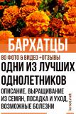 Бархатцы (Чернобривцы) Описание, выращивание из семян, посадка и уход, болезни (80+ Фото & Видео) +Отзывы