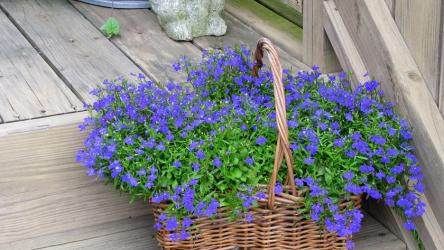 ТОП-55 Цветов и растений голубого цвета для вашего дома и сада. Комнатные и уличные, многолетние и однолетние (85+ Фото & Видео) +Отзывы