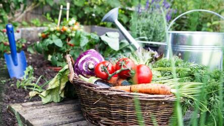 Лунный посевной календарь садовода и огородника на июль 2020 года