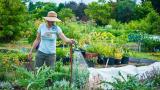 Лунный посевной календарь садовода и огородника на июнь 2020