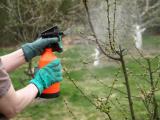 Обработка сада весной от болезней и вредителей – гарантия хорошего роста, развития и плодоношения деревьев и кустарников   (Фото & Видео) +Отзывы