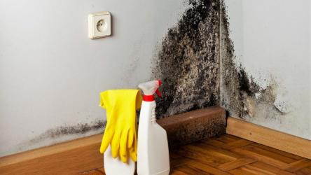Как навсегда удалить грибок со стен в ванной и других помещениях в квартире: причины появления, виды плесени, способы борьбы и профилактика |+Отзывы