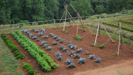 Приспособление для эффективной прополки сорняков 👍