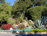 ТОП-15 Лучших декоративных засухоустойчивых растений для вашего сада (Фото & Видео) +Отзывы