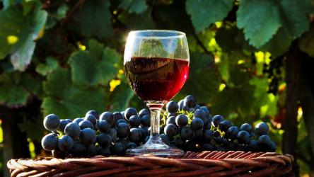 Как сделать домашнее вино из винограда? ТОП-10 простых и проверенных рецептов с пояснениями