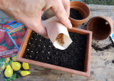 Когда сажать семена на рассаду? | Рассада из семян в домашних условиях | +Видео