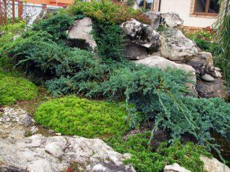 Как сделать альпийскую горку на даче своими руками? | Устройство и пошаговые советы (60+Фото & Видео)