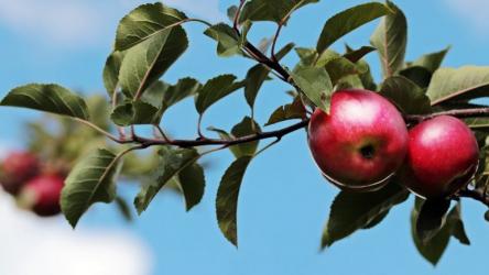 Заготовки из яблок на зиму — рецепты, богатое разнообразие вариаций: моченные яблоки, варенье, повидло, джем, пюре и компот