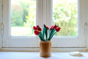 очень красивые тюльпаны