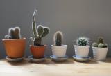 Как ухаживать за кактусом в домашних условиях: особенности ухода после покупки, в зимнее время, цветение, размножение и полив   (Фото & Видео)