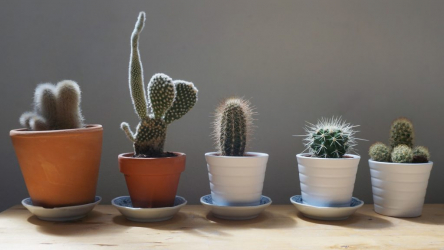 Как ухаживать за кактусом в домашних условиях: особенности ухода после покупки, в зимнее время, цветение, размножение и полив | (Фото & Видео)