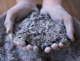 Древесная зола как удобрение для садовых и огородных культур, способы применения