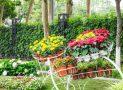 Многолетние цветы (ТОП-50 видов): садовый каталог для дачи с фото и названиями | Видео + Отзывы