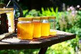 25 видов меда: его полезные свойства и противопоказания, для мужчин, женщин и детей