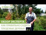 [ВИДЕО] Как правильно сажать плодовые деревья