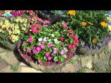 [ВИДЕО] Обзор однолетних цветов