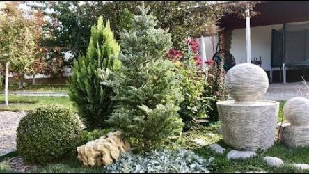 [ВИДЕО] Хвойные растения