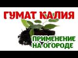 [ВИДЕО] Гумат Калия