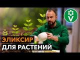 [ВИДЕО] Стимулятор роста растений своими руками