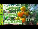 [ВИДЕО] Подкормки томатов во врем плодоношения