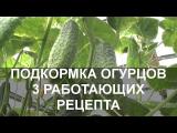 [ВИДЕО] Подкормка огурцов