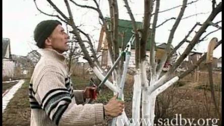 [ВИДЕО] Как правильно обрезать яблоню