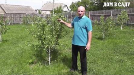 [ВИДЕО] Как ухаживать за саженцами яблони