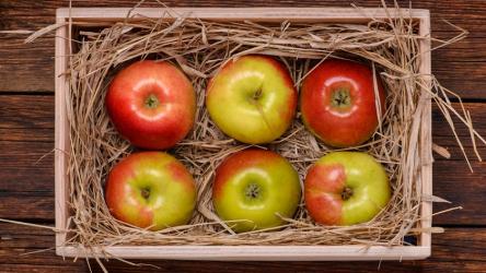 Как правильно сохранить яблоки на зиму в домашних условиях: изучаем тонкости и возможности | (Фото & Видео)