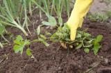 Как навсегда избавиться от сорняков на дачном участке: народными средствами, химией и другими способами | (Фото & Видео)