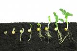 Как всего за 48 часов прорастить семена на рассаду: 2 способа