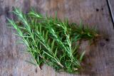 Как вырастить розмарин в домашних условиях из семян или черенками веточек   (Фото & Видео) +Отзывы