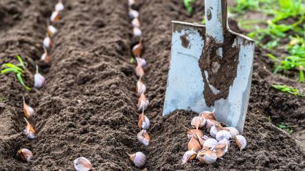 Какие овощи можно сажать под зиму? ТОП-8 самых подходящих растений и лучшие их сорта   (Фото & Видео) +Отзывы