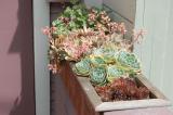 Каменная роза домашняя (Молодило): описание, виды, особенности посадки, размножения, выращивания и применения в ландшафтном дизайне   (100+ Фото & Видео)