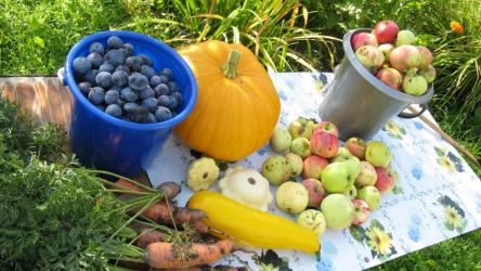 Лунный посевной календарь садовода и огородника на август 2020 года
