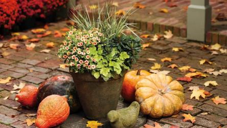 Лунный посевной календарь садовода и огородника на ноябрь 2020 года