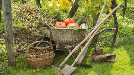 Лунный посевной календарь садовода и огородника на октябрь 2020 года