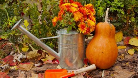 Лунный посевной календарь садовода и огородника на сентябрь 2020 года
