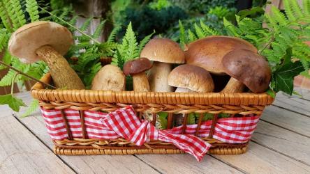 Съедобные и несъедобные грибы, грибы-двойники. 16 видов с названиями и описанием (Фото & Видео) +Отзывы