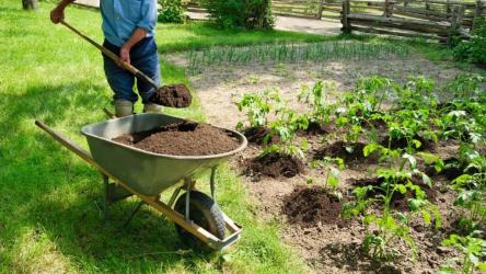 Натуральные удобрения для огорода и комнатных цветов: описание и их применение | ТОП-20 подкормок | (Фото & Видео) +Отзывы