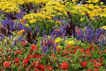 ТОП-20 растений, цветущих в июле: что стоит выбрать для сада, огорода или клумбы? (Фото & Видео) +Отзывы
