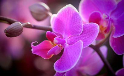 Уход за орхидеей в домашних условиях — тропическая красавица на подоконнике (40+ Фото & Видео) +Отзывы