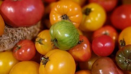 Томаты: характеристика и описание 25 лучших сортов с отзывами огородников | (Фото & Видео)