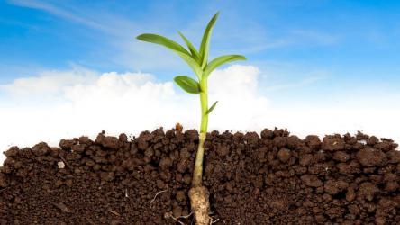 Как повысить плодородие почвы? ТОП-8 экологически безопасных вариантов +агротехнические методы | +Отзывы