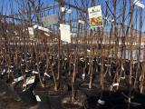 Почему не приживаются саженцы плодовых деревьев? ТОП-15 Причины плохого роста   (Фото & Видео)+Отзывы