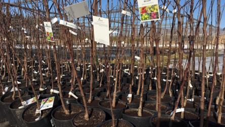 Почему не приживаются саженцы плодовых деревьев? ТОП-15 Причины плохого роста | (Фото & Видео)+Отзывы